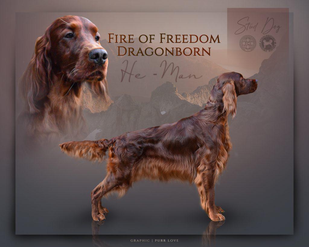 He-Man Fire of Freedom Dragonborn